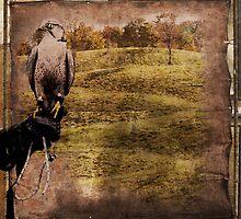 freedom to fly, or falcon hunt by olga  hutsul