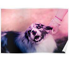 princess puppins Poster