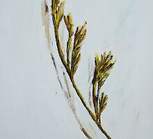 Grass in White by MIchelle Thompson