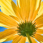 Flower with small bug (click to enlarge) by DigitalTulip