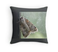 Cute Moth on the Dusty Pane Throw Pillow