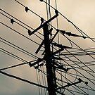 Wire prints by Nicolas Noyes