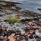 Hyams beach by andreisky