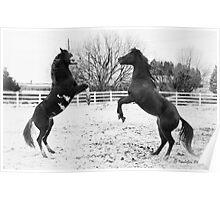 "Rumbling Stallions ""Let the games begin"" Poster"