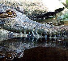 Crocodile x2 by Dave Storym