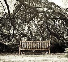 "Back in Times - Gardens ""In memoriam"" by Carole Anne Ferris"