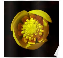 Perfect waterlily Poster