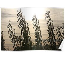 Long Reeds Poster