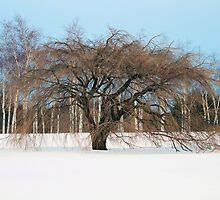 Tree In Snow by SuddenJim