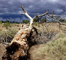 Dead Tree in Joshua Tree by Dave Storym