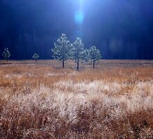Yosemite National Park's Fields of Gold by Dave Storym