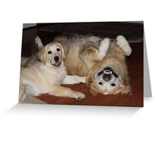 Golden Retrievers playing Greeting Card