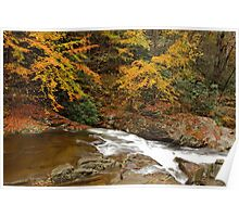 Laurel Creek Cascades II Poster