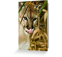 Uh-Oh....Hungry Kitty Greeting Card