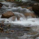 Delatite River by Lee Revell