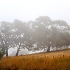 Summer Fog by Briony  Williams Photography