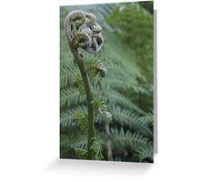tree fern Greeting Card