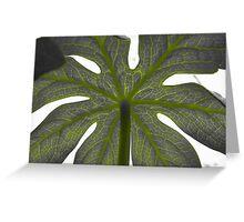 Nature's Umbrella Greeting Card