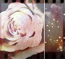 Soft Rose by Vanessa Barklay