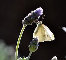 Summer Sunshine by Phrancis Whiteley
