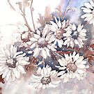 White Daisies by Marie Theron