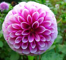 That'll be the Dahlia by pix-elation
