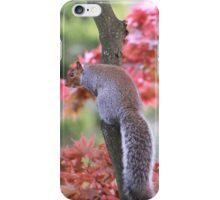 Playful squirrels iPhone Case/Skin