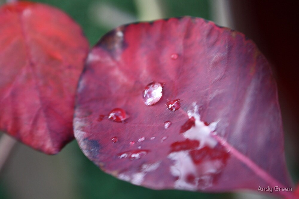 Red Leaf Water Droplet North Wales by Andy Green