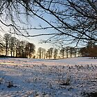 Snow at Faughart, Co Louth by Mairead1