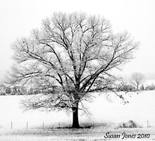 Oak in the Snow by mountainshadows