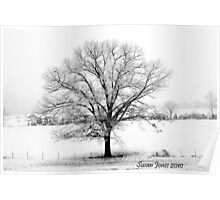 Oak in the Snow Poster