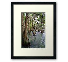 Cypress Trees Framed Print