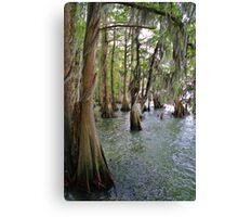 Cypress Trees Canvas Print