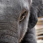Baby Elephant Face by GarethWilton