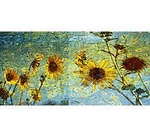 Sunshine Field Photographic Print