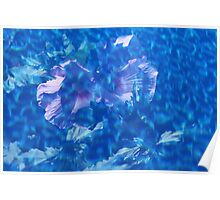 Violet Satin Reflections Poster