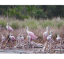 KAYAK TRIPS IN FLORIDA Photographic Print