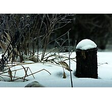 Winter in the Garden Photographic Print