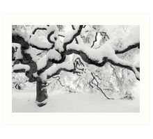 Japanese Maple Tree Art Print