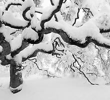 Japanese Maple Tree by Oscar Gutierrez
