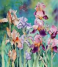 Multicoloured Irises  by Ann Mortimer