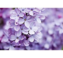 Colorful Lilac Photographic Print
