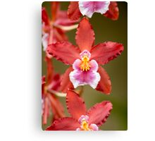 Pink and Red Orchid Canvas Print
