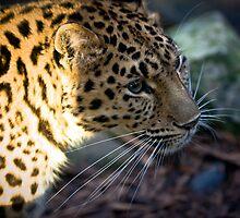 big Cat by Sebastian Chalupa