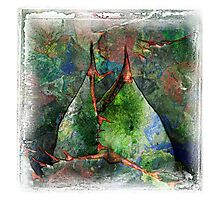 The Atlas Of Dreams - Color Plate 63 Photographic Print