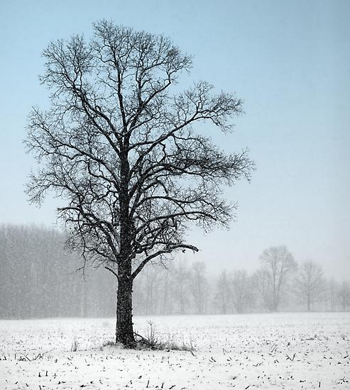 Solitary by Renee Blake