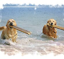 Goldies and sticks,Shetland by Winksy