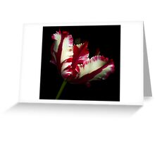White and Red Tulip II Greeting Card