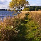 Cameron Loch-side Walk by GillBell