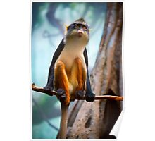 A Wolf's Monkey striving for balance Poster